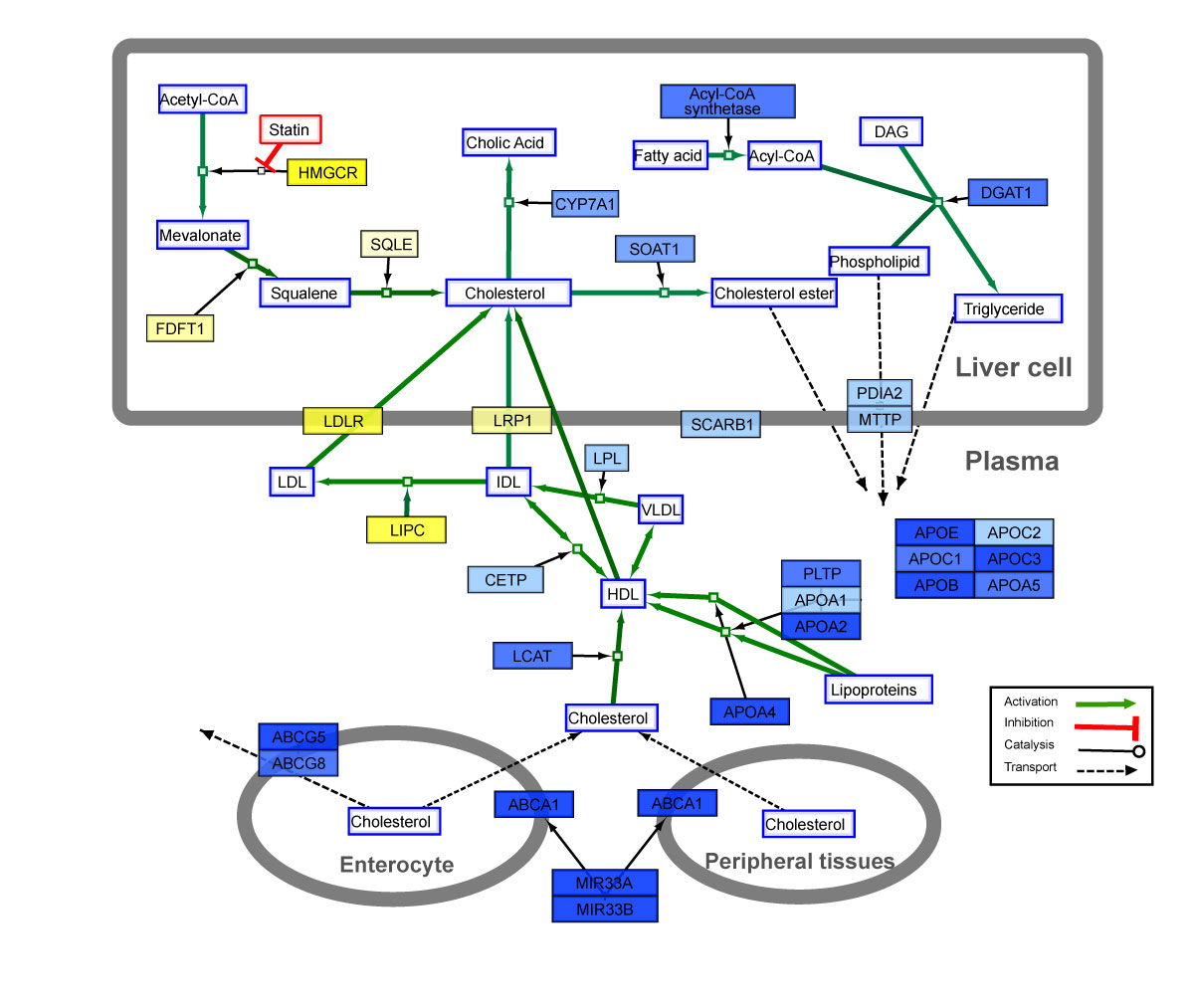 WikiPathways 4